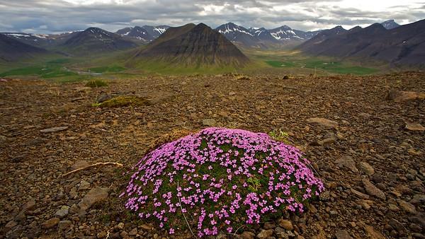 Island, Westfjorde  Iceland, Westfjords