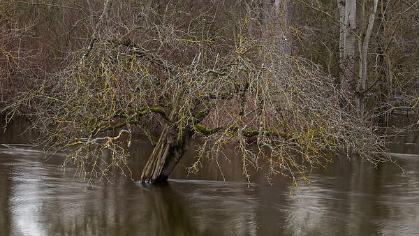 Hochwasser am Altrhein - Au am Rhein, Deutschland   Flood on the Old Rhine - Au am Rhein, Germany  - mehr dazu im Blog: Bunte Weihnachten am Altrhein