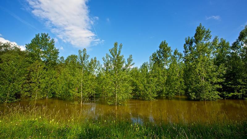 """Am Hochwasserdamm<br /><br />  At the flood dam<br /><br />  - mehr dazu im Blog: <a href=""""http://arnohelfer.wordpress.com/2013/06/03/der-braune-rhein/"""">Der braune Rhein</a>"""