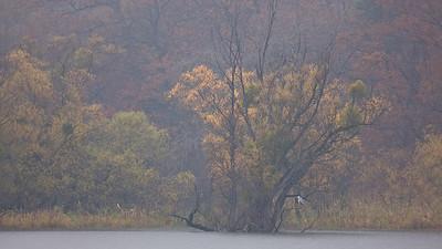 Ein Graureiher (Ardea cinerea) sitzt geduldig am Ufer - Fermasee, Rheinstetten, Deutschland  A gray heron sits patiently on the shore - Fermasee, Rheinstetten, Germany  - mehr dazu im Blog: Fotografieren im Regen