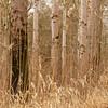 """Pappelwald <br /> Populus Forest <br /> - mehr dazu im Blog: <a href=""""http://arnohelfer.wordpress.com/2012/04/16/pappelwald-rheinauen/"""">Pappelwald - Rheinauen</a>"""