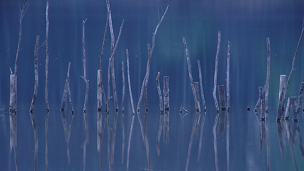 Pfähle - Fermasee Rheinstetten, Deutschland Das ist eines meiner persönlichen Lieblingsbilder;) Aufgenommen noch mit der Nikon F100, 600mm Brennweite auf Fuji Velvia Diafilm. Diese (Licht)-Stimmung habe ich bisher nur an diesem einen Abend so erlebt. Mittlerweile sind viele dieser Pfähle ziemlich verkümmert ...