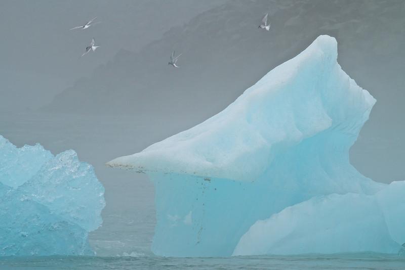Eisberge und Küstenseeschwalben in der Gletscherlagune Jökulsárlón - Island<br /> <br /> Icebergs and Arctic Terns in Glacier Lagoon Jökulsárlón - Iceland