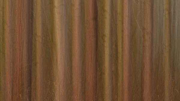Pappelwald abstrakt Populus Forest abstractly - mehr dazu im Blog: Pappelwald - Rheinauen