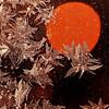 """Ice flowers - Arvidsjaur, Norrbottens län, Sweden <br /> - mehr dazu im Blog: <a href=""""http://arnohelfer.wordpress.com/2011/03/10/kunstwerke-aus-eis/"""">Kunstwerke aus Eis</a>"""