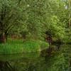 Frisches Grün am Altrhein
