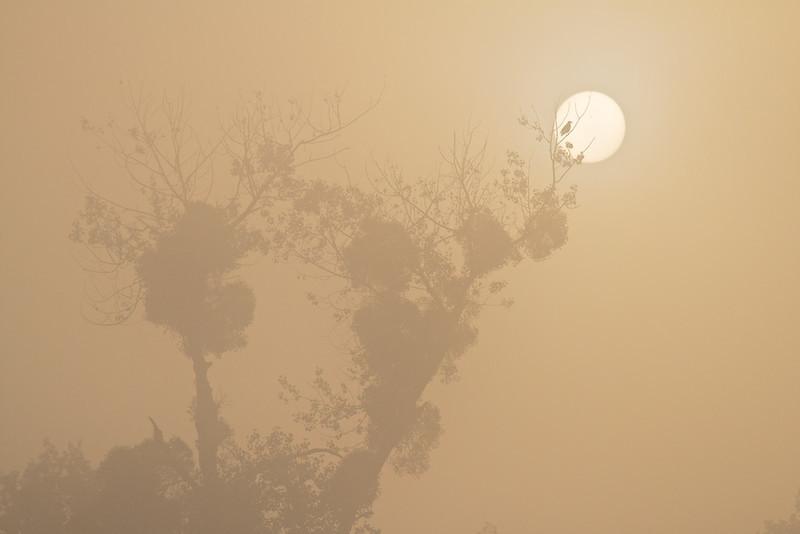 Sonnenaufgang im Nebel,<br /> Sunrise in fog
