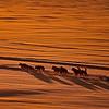 """Lappland -30°C perfektes Licht - Sorsele, Schweden / <br /> Lappland -22°F perfect Light - Sorsele, Sweden<br /> - mehr dazu im Blog: <a href=""""http://arnohelfer.wordpress.com/2011/01/10/lappland-bei-30°c/"""">Lappland bei -30°C</a>"""
