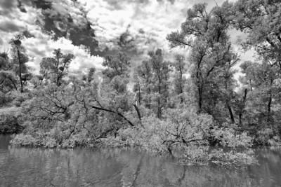Hochwasser am Altrhein, mittlerer Oberrhein, Deutschland Flood at the Old Rhine - Germany - mehr dazu im Blog: Altrhein in Schwarzweiß