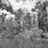 """Hochwasser am Altrhein, mittlerer Oberrhein, Deutschland<br /> Flood at the Old Rhine - Germany<br /> - mehr dazu im Blog: <a href=""""http://arnohelfer.wordpress.com/2012/08/25/altrhein-in-schwarzweis/"""">Altrhein in Schwarzweiß</a>"""