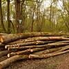 """Abgeholzt <br /> Cleared <br /> - mehr dazu im Blog: <a href=""""http://arnohelfer.wordpress.com/2012/04/16/pappelwald-rheinauen/"""">Pappelwald - Rheinauen</a>"""