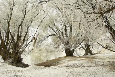 Altrhein-Ufer mit Schnee und Raureif bei Niedrigwasser