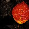 """Regentropfen auf Pappelblatt <br> Raindrops on a populus leaf<br> - mehr dazu im Blog: <a href=""""http://arnohelfer.wordpress.com/2013/10/10/herbst-in-den-bergen/"""" rel=""""nofollow"""">Herbst in den Bergen</a>"""