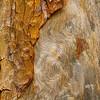"""Detail eines uralten Waldkiefer (Pinus sylvestris) - Hede Urskog, Härjedalen, Schweden <br /> Detail of a very old Scots Pine - Hede Urskog, Härjedalen, Sweden <br /><br /> - mehr dazu im Blog: <br /><a href=""""http://arnohelfer.wordpress.com/2012/10/18/uralt-waldkiefern-im-detail/"""">Uralt - Waldkiefern im Detail</a><br /><a href=""""http://arnohelfer.wordpress.com/2012/07/22/hede-urskog-kiefernurwald-in-schweden/"""">Hede Urskog - Kiefernurwald in Schweden</a><br />"""