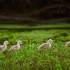 Der Nachwuchs auf dem Rückweg zum Nest