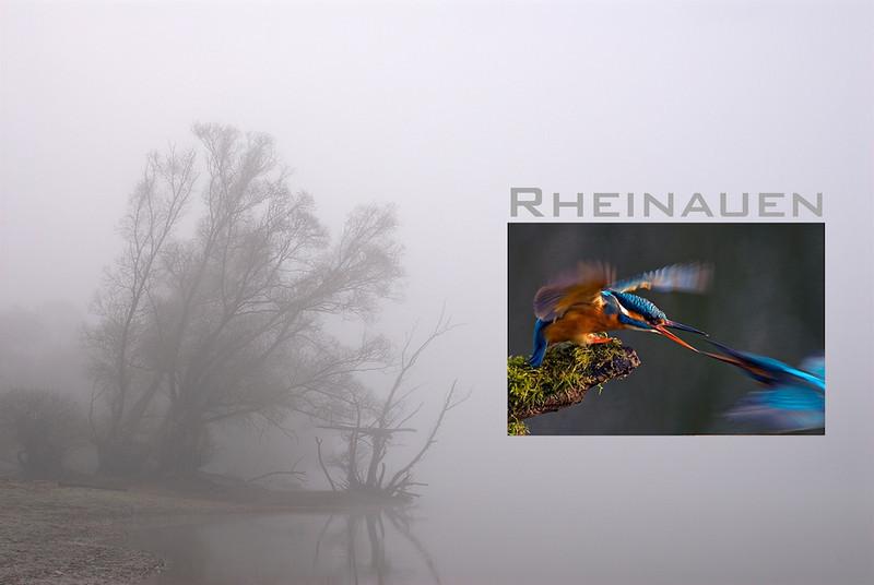 """Titelbild Rheinauen-Multivision <br /> mehr dazu im Blog: <a href=""""http://arnohelfer.wordpress.com/2010/08/31/termine/"""">Termine Rheinauen</a>"""