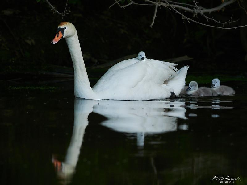 Danach hat die Mutter das Nest mit Ihren 5 Kleinen verlassen