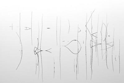 Schilf  Phragmites - mehr dazu im Blog: Schilf abstrakt