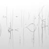 """Schilf <br> Phragmites<br> - mehr dazu im Blog: <a href=""""http://arnohelfer.wordpress.com/2013/11/01/schilf-abstrakt/"""">Schilf abstrakt</a>"""