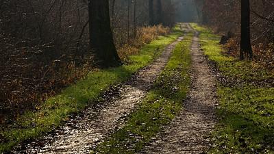 Der Weg, Rheinauen bei Rheinstetten - Deutschland The way, Rheinauen near Rheinstetten - Germany - mehr dazu im Blog: Wintergrün