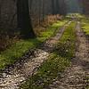 """Der Weg, Rheinauen bei Rheinstetten - Deutschland <br>The way, Rheinauen near Rheinstetten - Germany<br> - mehr dazu im Blog: <a href=""""http://arnohelfer.wordpress.com/2014/01/14/wintergruen/"""">Wintergrün </a>"""