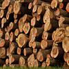 """0 13 <br /> - mehr dazu im Blog: <a href=""""http://arnohelfer.wordpress.com/2012/04/16/pappelwald-rheinauen/"""">Pappelwald - Rheinauen</a>"""
