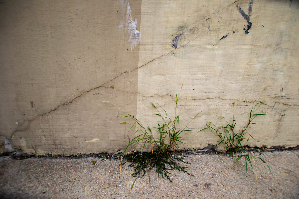 Weeds in the wall