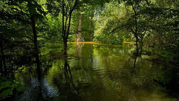 überfluteter Rheinwald  flooded forest  - mehr dazu im Blog: Der braune Rhein