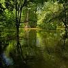 """überfluteter Rheinwald<br /><br />  flooded forest<br /><br />  - mehr dazu im Blog: <a href=""""http://arnohelfer.wordpress.com/2013/06/03/der-braune-rhein/"""">Der braune Rhein</a>"""
