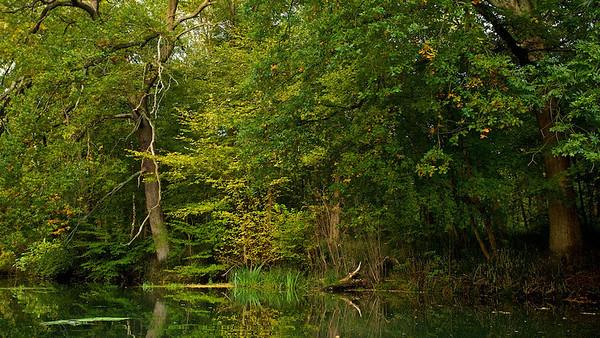 Wildnis am Federbach bei Rheinstetten