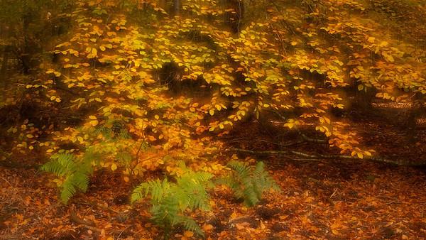 Herbstwald - Pfälzer Wald, Deutschland  autumn Forest - Palatinate Forest, Germany  - mehr dazu im Blog: Altschlossfelsen