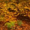 """Herbstwald - Pfälzer Wald, Deutschland <br /> autumn Forest - Palatinate Forest, Germany <br /><br /> - mehr dazu im Blog: <br /><a href=""""http://arnohelfer.wordpress.com/2012/11/11/altschlossfelsen/"""">Altschlossfelsen</a><br />"""