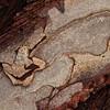 Baumrinde im Detail<br /> Bark in Detail