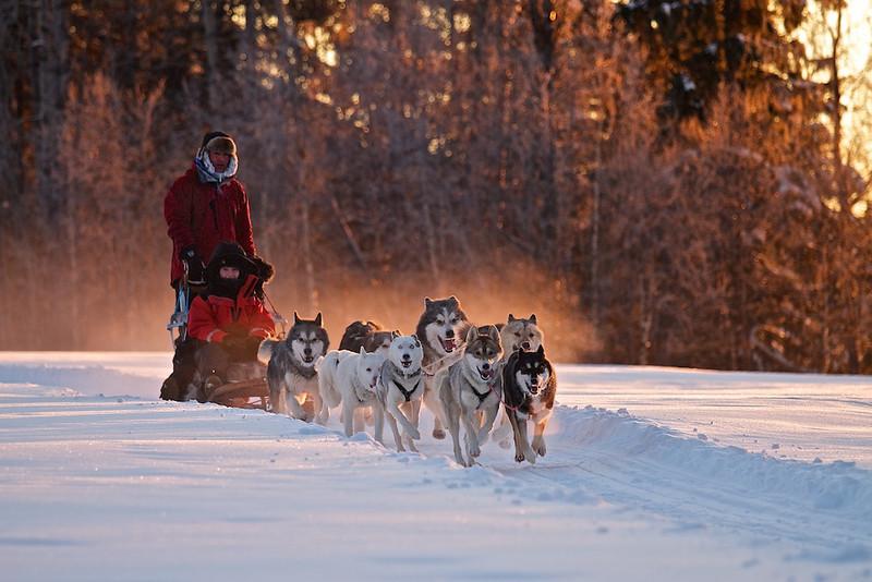 """Polarhunde bei der Arbeit <br /> mehr dazu im Blog: <a href=""""http://arnohelfer.wordpress.com/2011/01/10/lappland-bei-30°c/"""">Lappland bei -30°C</a>"""