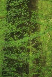 First Green in the Forest Erstes Grün im Wald