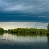 Vor dem Regen - Höckerschwan auf dem Altrhein, mittlerer Oberrhein, Deutschland<br /> Before the rain - Mute swan on the Old Rhine, middle Upper Rhine, Deutschland