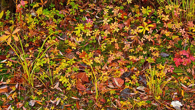 Bunte Pflanzen am Ufer - Fermasee, Rheinstetten, Deutschland  Multicolored plants on the bank - Fermasee, Rheinstetten, Germany  - mehr dazu im Blog: Fotografieren im Regen