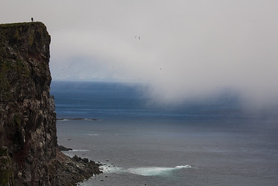 Látrabjarg, Europes West-End - Iceland Home of many birds like puffins, razorbills, ... Europe's largest bird cliff