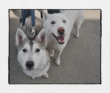 Max and Kiwa