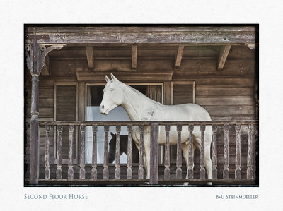 Second Floor Horse