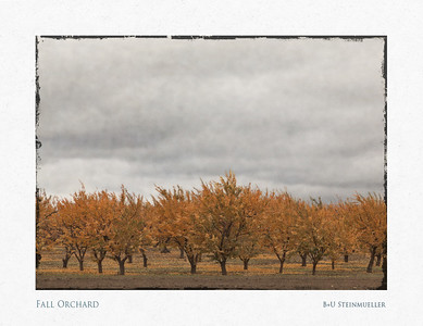 Fall Orchard