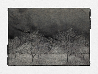Orchard in Winter (blended)