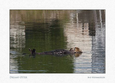 Dreamy Otter