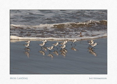 Moss Landing