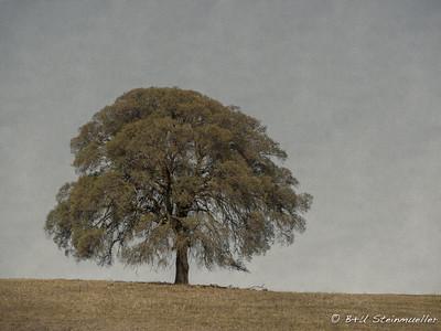 Beautiful Tree V3