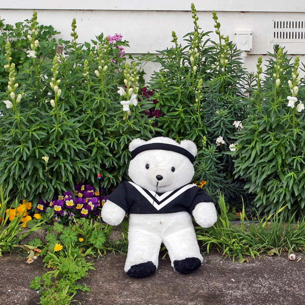 "TK Bear 002.jpg<br /> 0 x 10.8 x10.8cm/4x4"" in stock<br /> 0 x 15x15cm/6x6"" in stock<br /> Visiting bear decides to stay - poses in his new abode."
