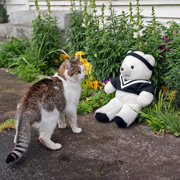 "TK Bear 001.jpg<br /> 0 x 10.8 x10.8cm/4x4"" in stock<br /> 0 x 15x15cm/6x6"" in stock<br /> Smooch and  visiting bear enjoy the garden."