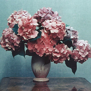 "TK 1950's 001.jpg    0 x 10.8 x10.8cm/4x4"" in stock ""Hydrangeas"" by Bill Elliot, photographed in the early 1950's. Image taken from scanned transparency in poor condition. Not available in larger sizes"