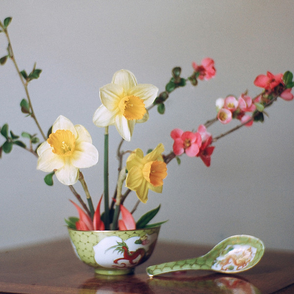 "TK 1950's 003.jpg<br /> 1 x 10.8 x10.8cm/4x4"" in stock<br /> <br /> ""Daffodils and Japonica"" by Bill Elliot, photographed in the early 1950's. Image taken from scanned transparency in very poor condition."