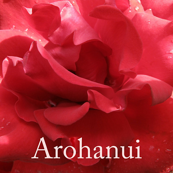 "TL Rose002.jpg<br /> Valentines day or appreciation tiles<br /> 1 x 10.8 x10.8cm/4x4"" in stock<br /> <br /> <br /> ""Arohanui"" is a Maori way of saying ""with big love"" and the rose image is from a sunny morning ramble around the lush and colourful gardens of Mona Vale in Christchurch."